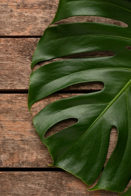 거대한 Monstera 잎의 상위 뷰 무료 사진