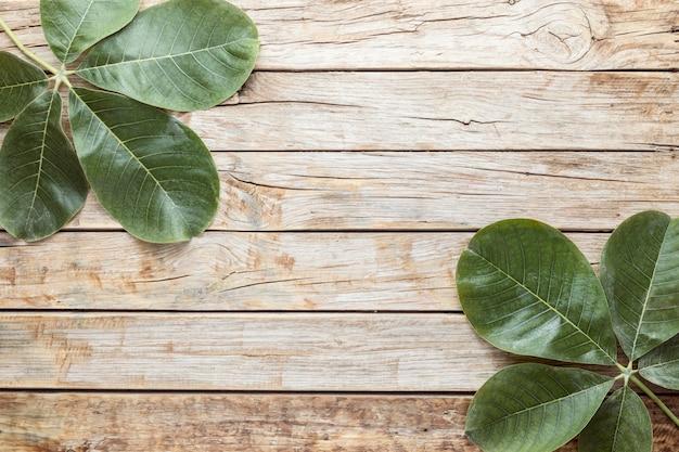 コピースペースと葉の上面図 Premium写真