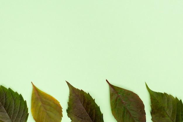 복사 공간 잎의 상위 뷰 프리미엄 사진