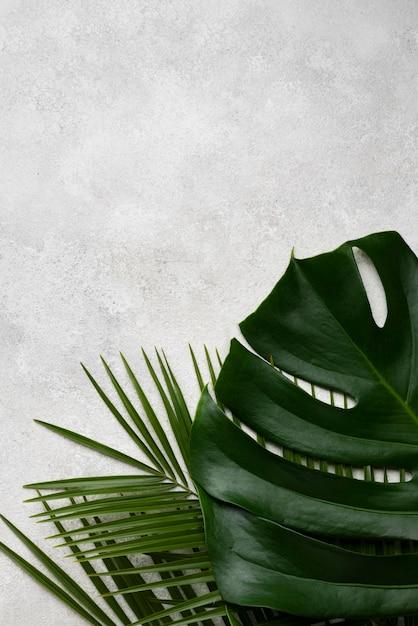 몬스 테라 잎 및 복사 공간이있는 다른 식물의 상위 뷰 무료 사진