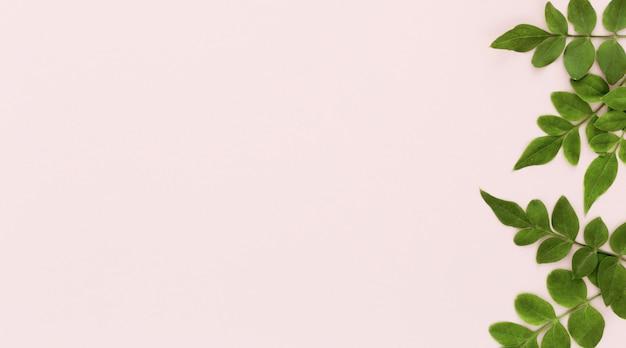 コピースペースを持つ複数の葉の平面図 無料写真