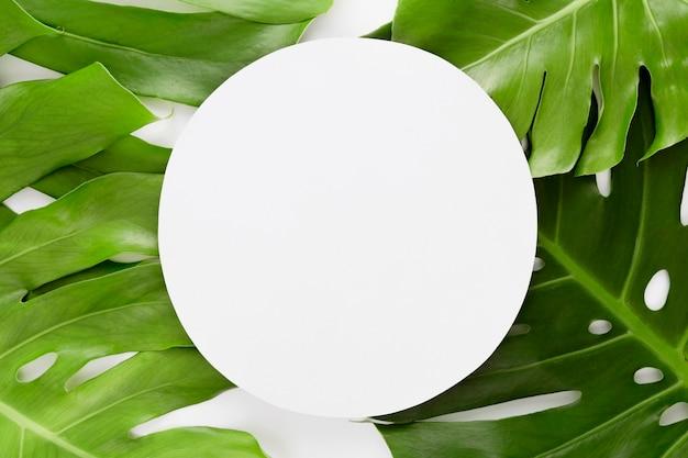 コピースペースを持つ複数のモンステラの葉の上から見る 無料写真