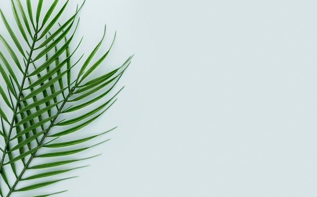Вид сверху на несколько тонких листьев с копией пространства Бесплатные Фотографии