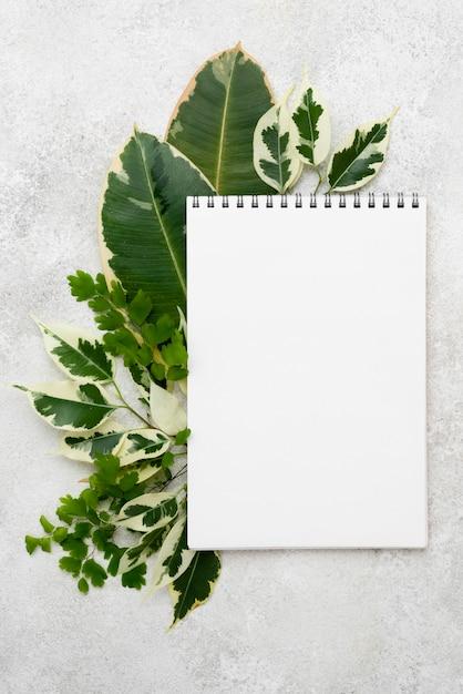 다른 식물 잎을 가진 노트북의 상위 뷰 무료 사진