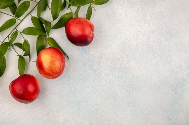 桃と左側にある葉とコピースペースと白い背景の上から見る 無料写真