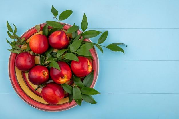 明るい青の表面に葉の枝を持つ黄赤プレート上の桃のトップビュー 無料写真