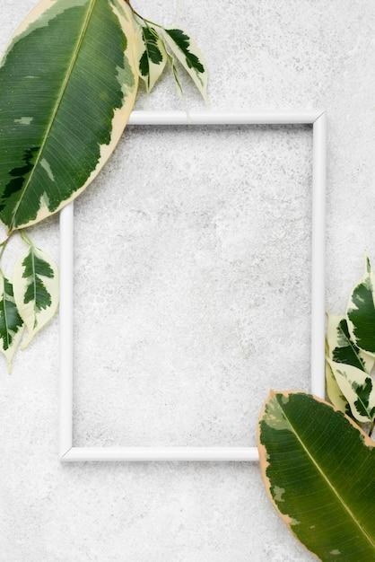 식물의 평면도 프레임 나뭇잎 무료 사진