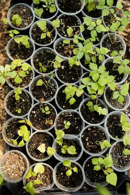 プラスチックポットの植物の平面図 無料写真