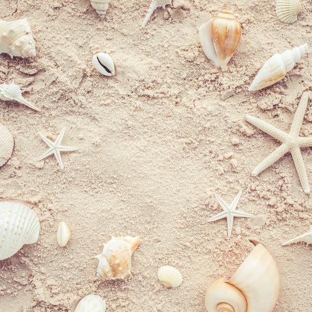 ビーチの貝殻の上面図。夏のコンセプト Premium写真