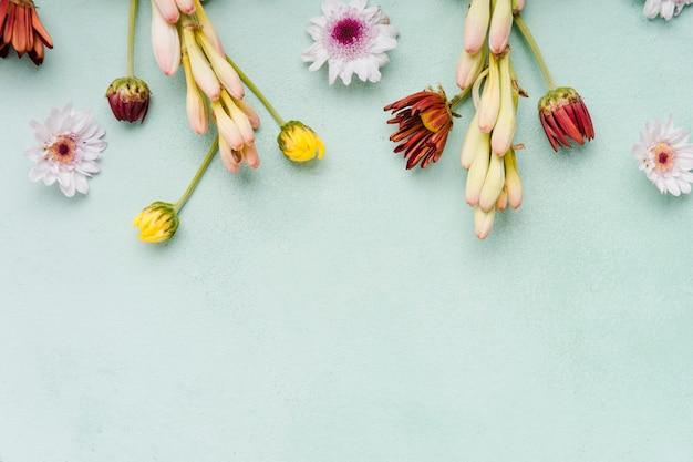 コピースペースを持つ春の蘭とヒナギクのトップビュー 無料写真