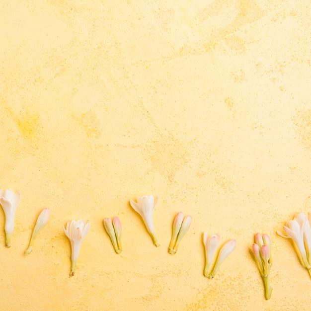 コピースペースを持つ春蘭のトップビュー 無料写真