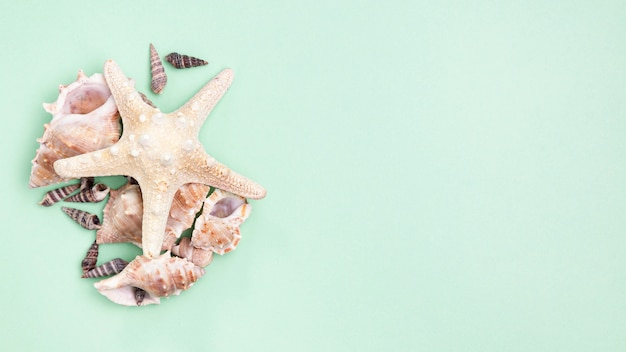 コピースペースを持つヒトデと海の貝のトップビュー 無料写真