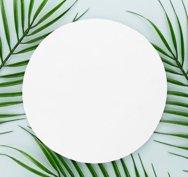 コピースペースを持つ薄い葉の平面図 無料写真