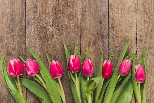 Top view of tulips in row Free Photo