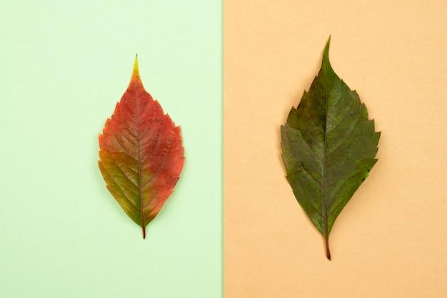 두 잎의 상위 뷰 프리미엄 사진