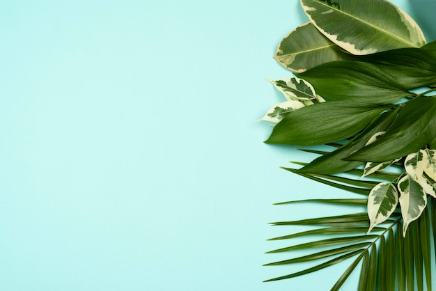 다양한 식물 잎의 평면도 무료 사진