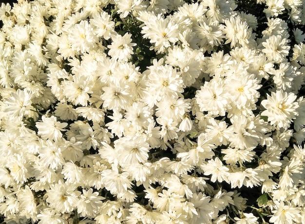 白い花の上面図。自然な背景 Premium写真