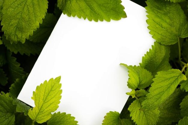 グリーンバームミントの葉の上のホワイトペーパーのトップビュー Premium写真