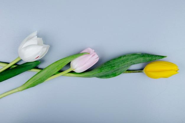 青の背景に分離された白黄色とピンク色のチューリップの花のトップビュー 無料写真