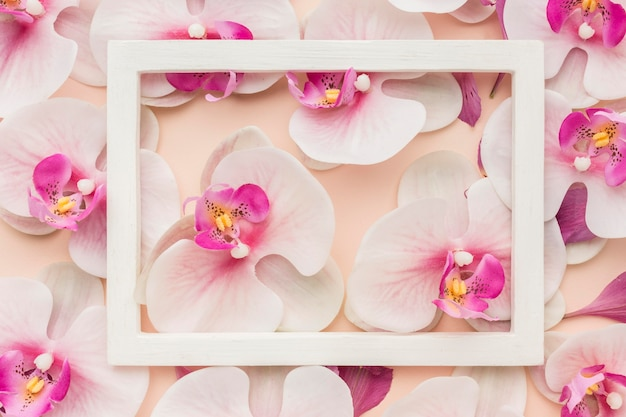 Top view orchids with frame Free Photo