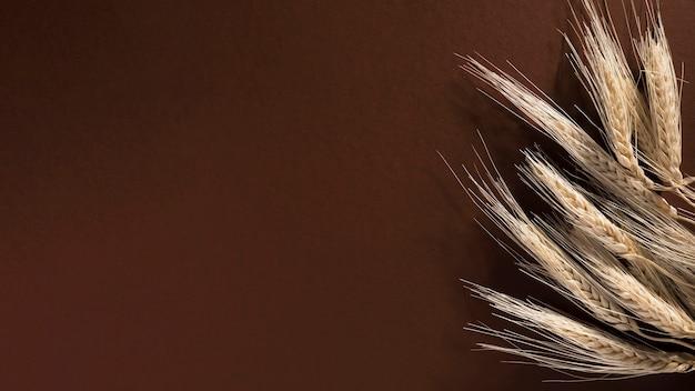 Вид сверху органическая пшеница с копией пространства Premium Фотографии