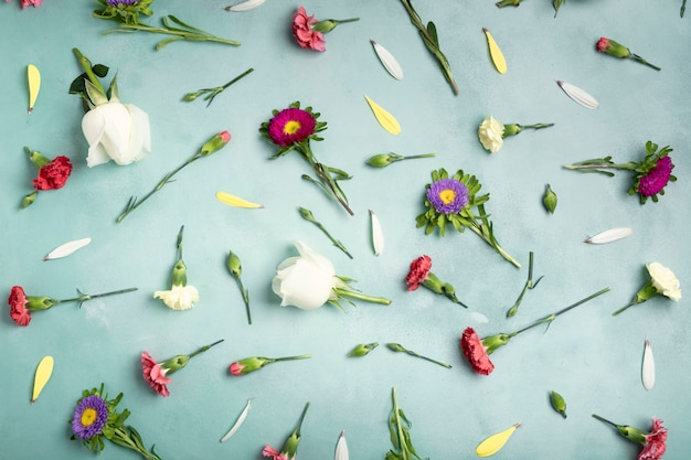 Top view petals and fresh flowers on blue background Free Photo