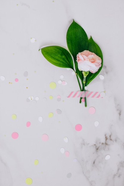 Top view pink carnation and on marble background. copy space, place for your text Premium Photo