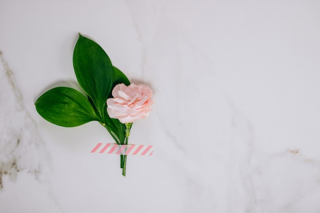 Top view pink carnation and on marble background. Premium Photo