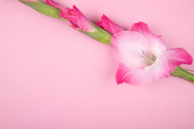 Vista superiore del fiore rosa di gladiolo di colore isolato su fondo rosa con lo spazio della copia Foto Gratuite