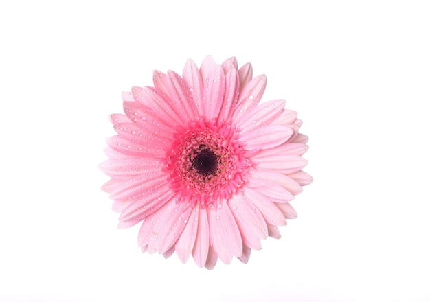 Top view of pink flower with drops Free Photo