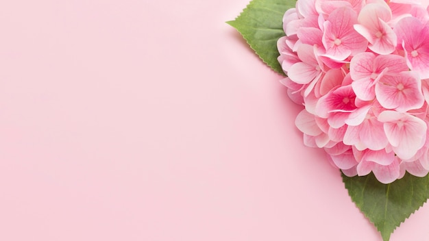Top view pink hydrangea with copy-space Premium Photo