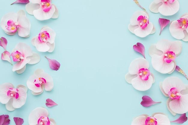 コピースペースを持つ平面図ピンクの蘭 Premium写真