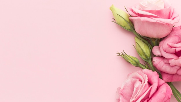 コピースペースを持つ平面図ピンクのバラ Premium写真