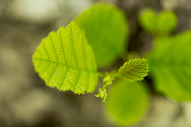 Top view plant leaves with blurred background Free Photo