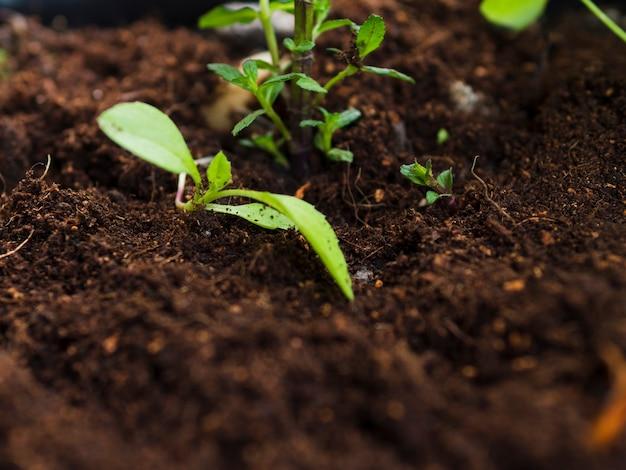土の上から見た植物 無料写真