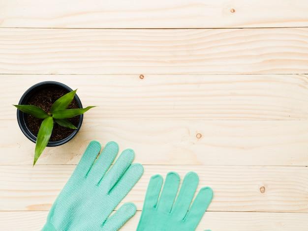 手袋とトップビューの植物 無料写真