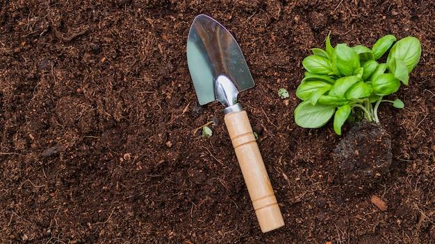 シャベルでトップビューの植物 Premium写真