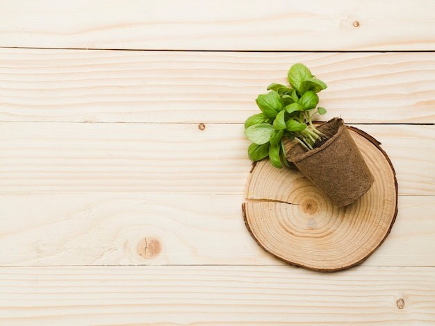 Top view plant on wooden table Free Photo