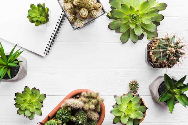 Top view of plants on a wooden surface Free Photo