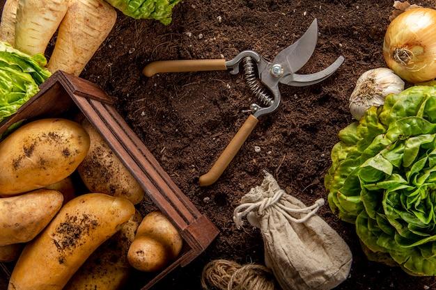 Vista dall'alto di patate con insalata e forbici Foto Gratuite