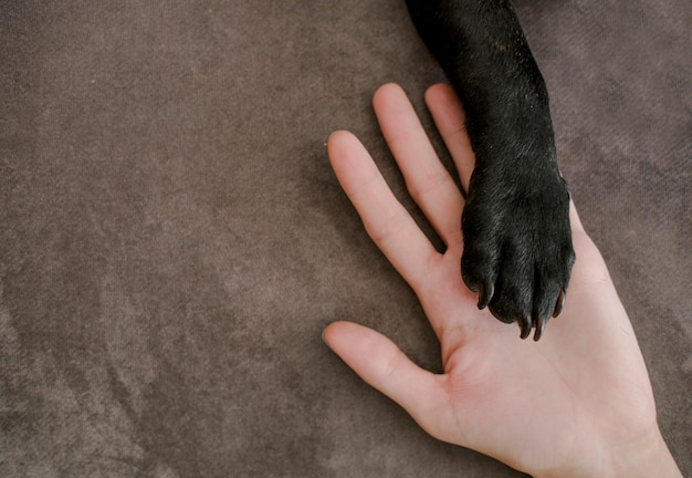 Top view puppy paw on top of hand Free Photo