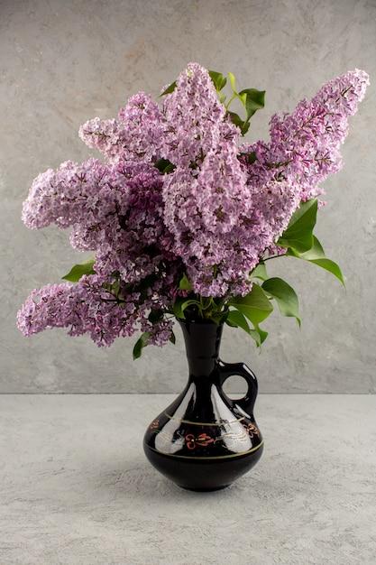 Вид сверху фиолетовые цветы красивые живые внутри черного кувшина на сером фоне Бесплатные Фотографии