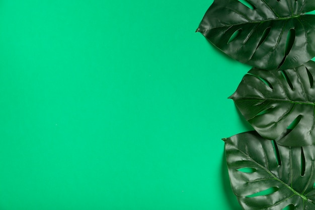 Top view realistic leaves on paper Free Photo