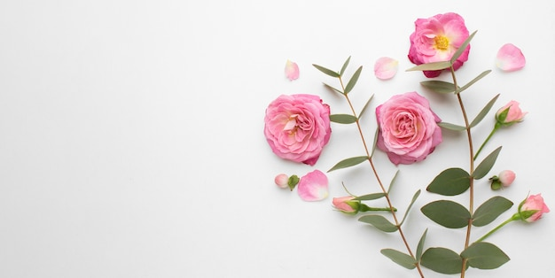 Top viewroses flowers with copy space Free Photo