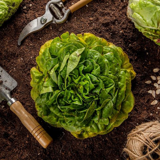 Vista dall'alto di insalata con attrezzi da giardino Foto Gratuite