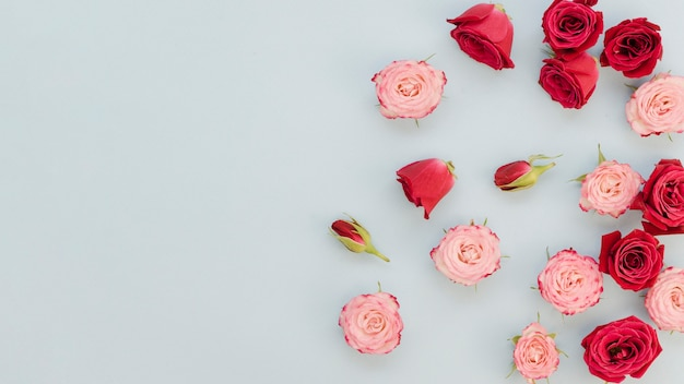 Top view of scattered roses Free Photo