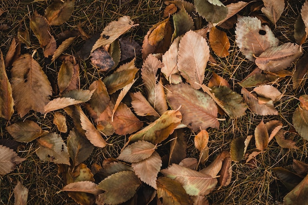 Top view shot of brown leaves Free Photo