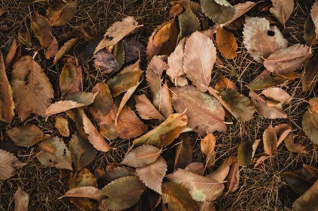 Вид сверху выстрел из коричневых листьев Бесплатные Фотографии