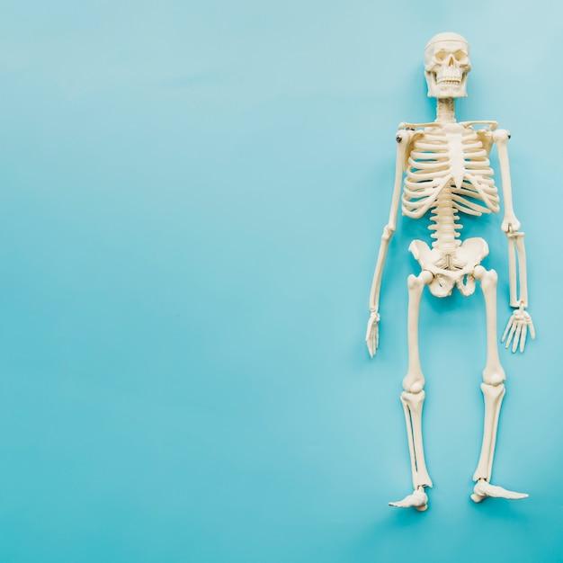 Top view skeleton Premium Photo
