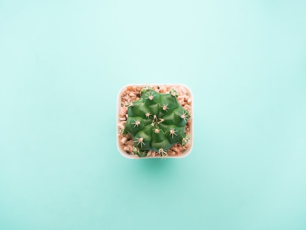 Top view small green cactus plant. Premium Photo